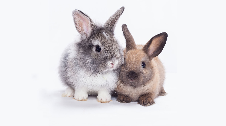 Twee-konijnen